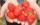 Mall´s Erdbeeren